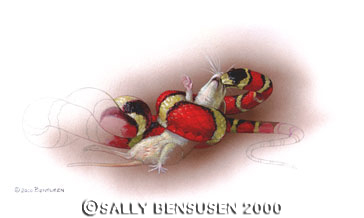 Rat snake by Sally Bensusen