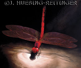 Dragonfly by Jessa Huebing-Reitinger