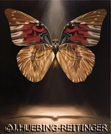 Hope the Butterfly by Jessa Huebing-Reitinger