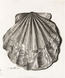 a fossil engraved by Anna lister